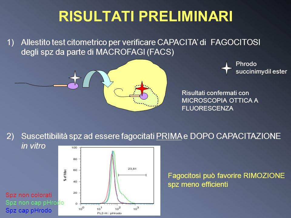 RISULTATI PRELIMINARI 1)Allestito test citometrico per verificare CAPACITA di FAGOCITOSI degli spz da parte di MACROFAGI (FACS) Risultati confermati c