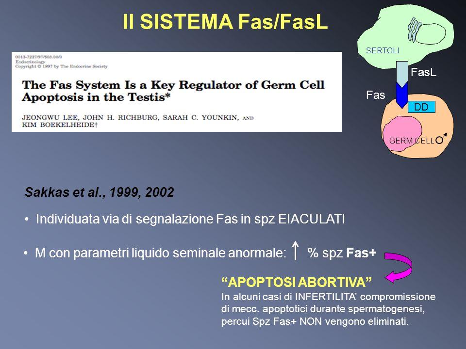 Individuata via di segnalazione Fas in spz EIACULATI M con parametri liquido seminale anormale:% spz Fas+ APOPTOSI ABORTIVA In alcuni casi di INFERTIL