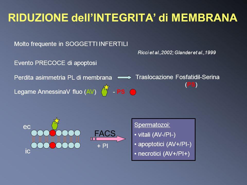 RIDUZIONE dellINTEGRITA di MEMBRANA Molto frequente in SOGGETTI INFERTILI Ricci et al.,2002; Glander et al.,1999 Perdita asimmetria PL di membrana Tra