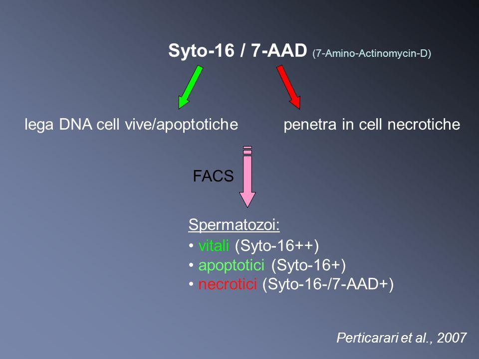 Perticarari et al., 2007 lega DNA cell vive/apoptotichepenetra in cell necrotiche FACS Spermatozoi: vitali (Syto-16++) apoptotici (Syto-16+) necrotici