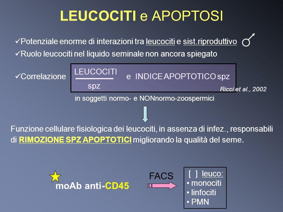 LEUCOCITI e APOPTOSI Funzione cellulare fisiologica dei leucociti, in assenza di infez., responsabili di RIMOZIONE SPZ APOPTOTICI migliorando la quali