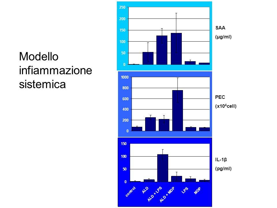 SAA (µg/ml) PEC (x10 4 cell) IL-1β (pg/ml) Modello infiammazione sistemica