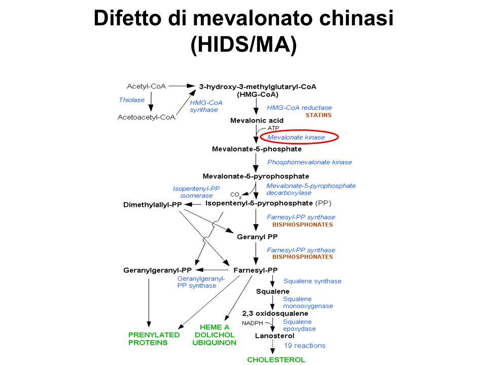 Untreated GGOH EFFETTO GGOH SAA (µg/ml) PEC (x10 4 cell) IL-1β (pg/ml)