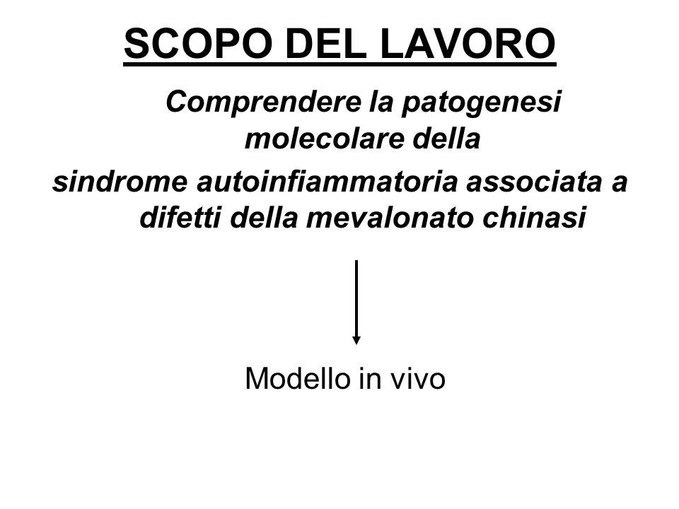Comprendere la patogenesi molecolare della sindrome autoinfiammatoria associata a difetti della mevalonato chinasi SCOPO DEL LAVORO Modello in vivo
