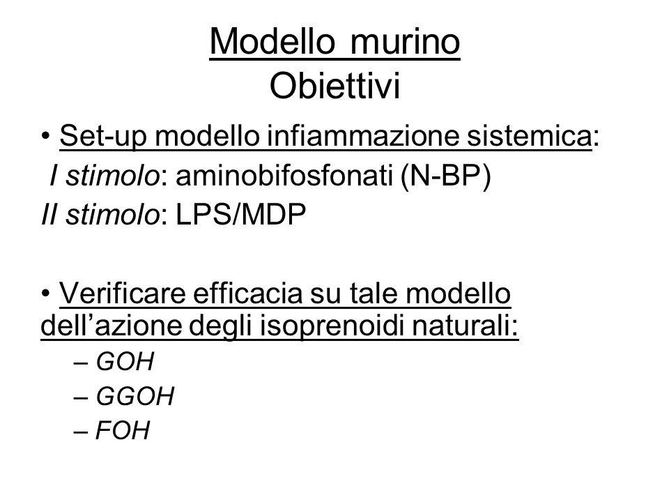 Modello murino Obiettivi Set-up modello infiammazione sistemica: I stimolo: aminobifosfonati (N-BP) II stimolo: LPS/MDP Verificare efficacia su tale m