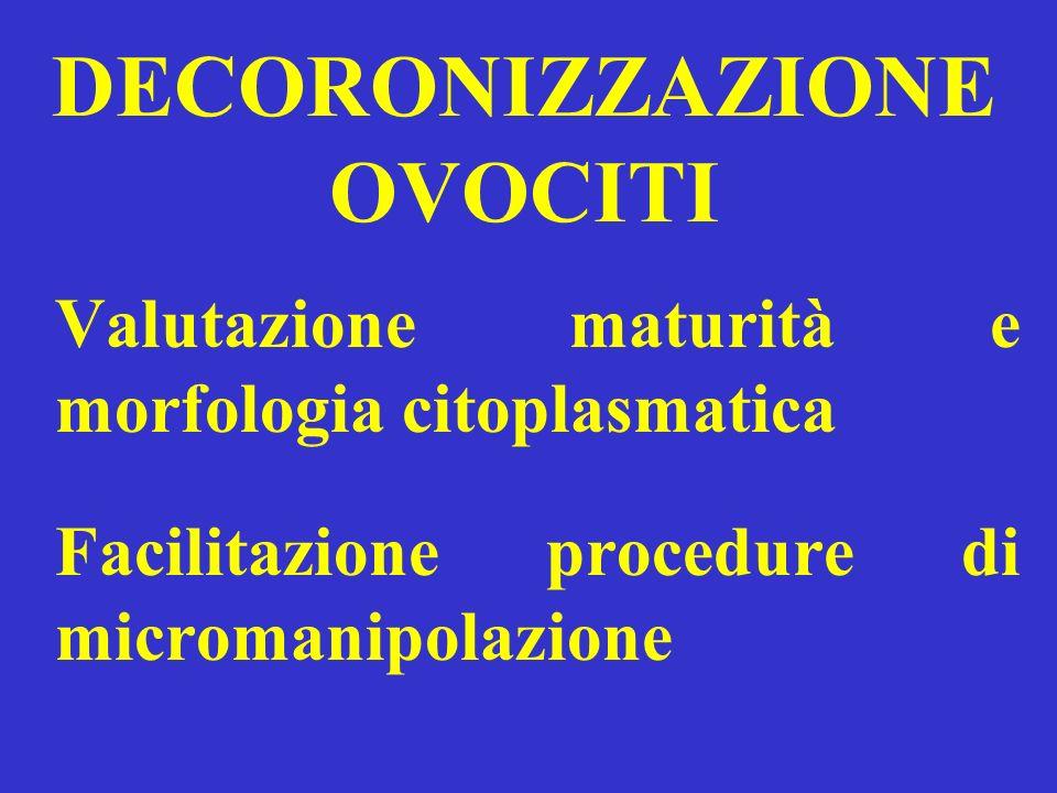 DECORONIZZAZIONE OVOCITI Valutazione maturità e morfologia citoplasmatica Facilitazione procedure di micromanipolazione