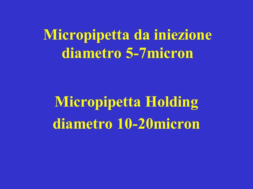Micropipetta da iniezione diametro 5-7micron Micropipetta Holding diametro 10-20micron