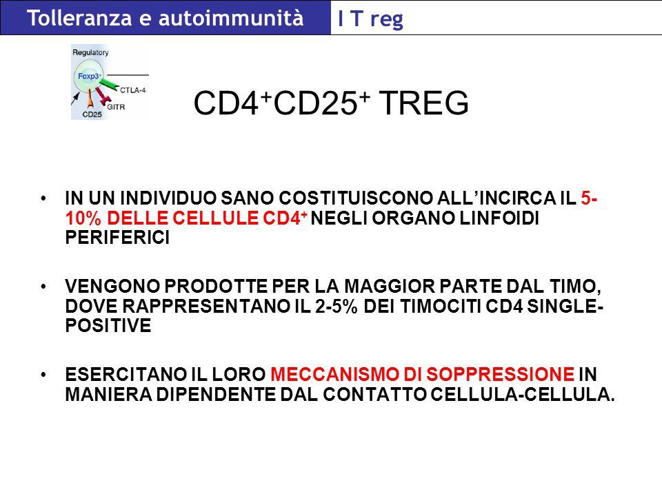 CD4 + CD25 + TREG IN UN INDIVIDUO SANO COSTITUISCONO ALLINCIRCA IL 5- 10% DELLE CELLULE CD4 + NEGLI ORGANO LINFOIDI PERIFERICI VENGONO PRODOTTE PER LA MAGGIOR PARTE DAL TIMO, DOVE RAPPRESENTANO IL 2-5% DEI TIMOCITI CD4 SINGLE- POSITIVE ESERCITANO IL LORO MECCANISMO DI SOPPRESSIONE IN MANIERA DIPENDENTE DAL CONTATTO CELLULA-CELLULA.
