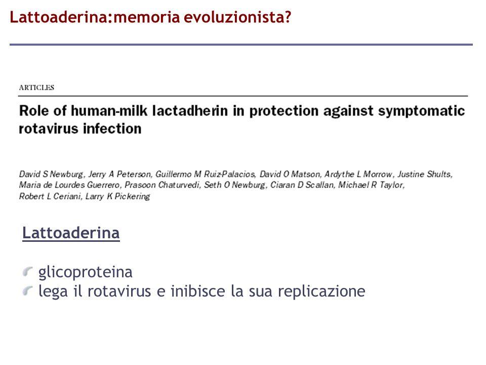 Lattoaderina glicoproteina lega il rotavirus e inibisce la sua replicazione Lattoaderina:memoria evoluzionista?