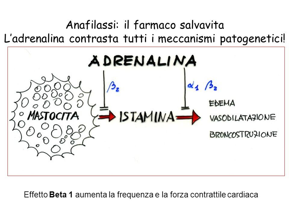 Anafilassi: il farmaco salvavita Ladrenalina contrasta tutti i meccanismi patogenetici! Effetto Beta 1 aumenta la frequenza e la forza contrattile car