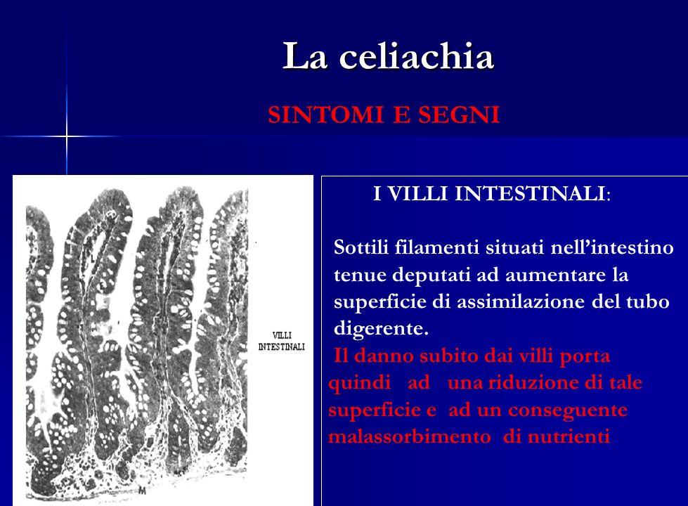 La celiachia SINTOMI GASTROINTESTINALI Diarrea cronica con steatorrea ( perdita di grassi non assorbiti con le feci) Dolori addominali, epigastralgia e dispepsia Meteorismo Vomito Spasmi addominali