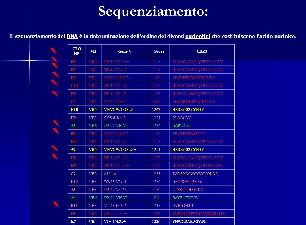 Sequenziamento: Il sequenziamento del DNA è la determinazione dell'ordine dei diversi nucleotidi che costituiscono l'acido nucleico.DNAnucleotidi CLO