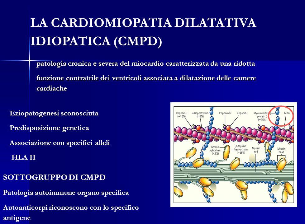 SOTTOGRUPPO DI CMPD Patologia autoimmune organo specifica Autoanticorpi riconoscono con lo specifico antigene LA CARDIOMIOPATIA DILATATIVA IDIOPATICA