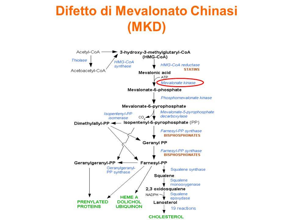 … dato il potenziale anti infiammatorio degli isoprenoidi e degli inibitori della farnesil-transferasi: è possibile ipotizzare una loro sinergia??.