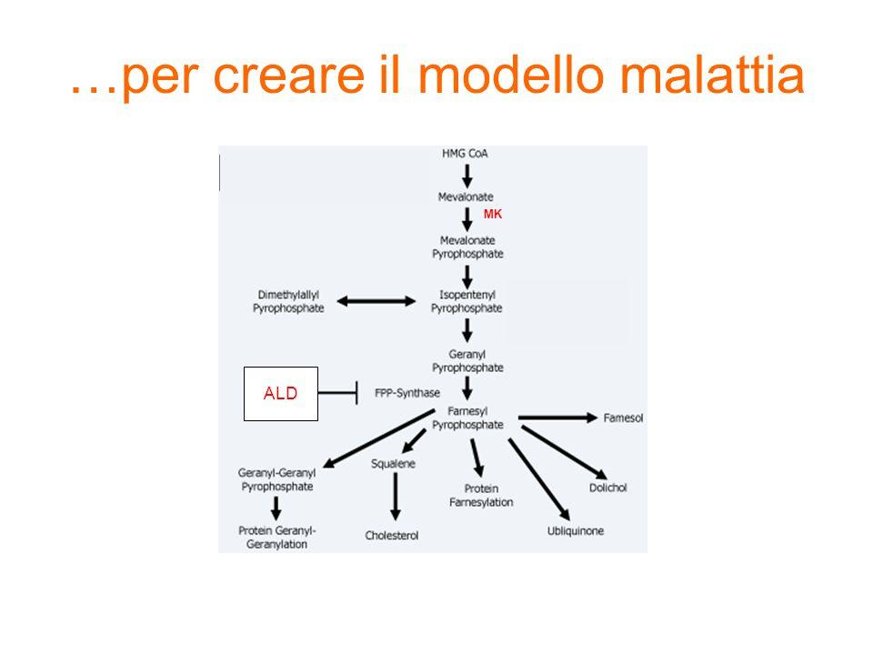 MK ALD …per creare il modello malattia