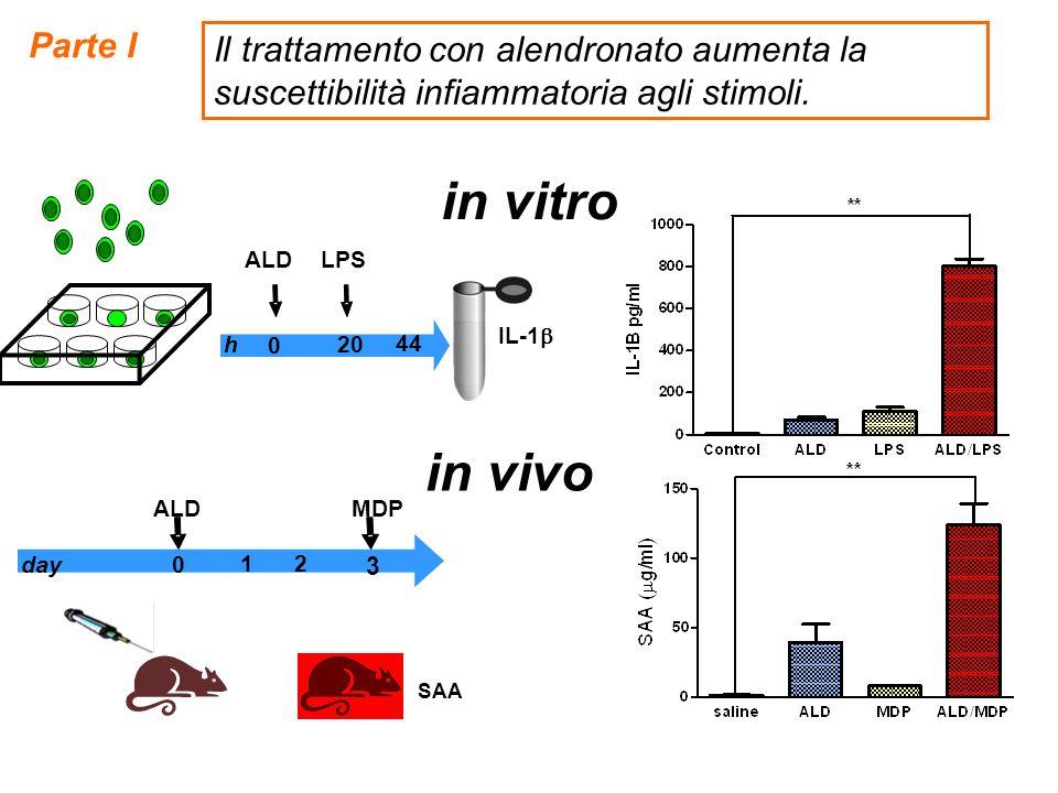 in vitro IL-1 0 44 h20 LPSALD 1 3 day0 MDP 2 SAA ALD in vivo Parte I Il trattamento con alendronato aumenta la suscettibilità infiammatoria agli stimo