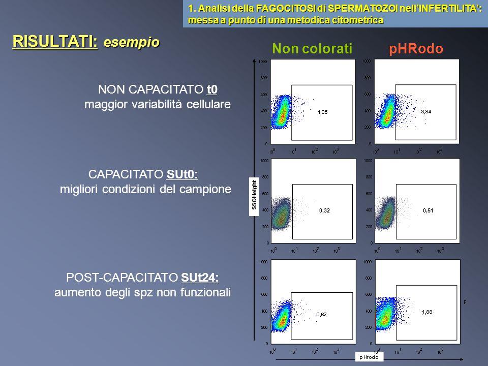 Studio effettuato su 14 pazienti NON-NORMOZOOSPERMICI 1.