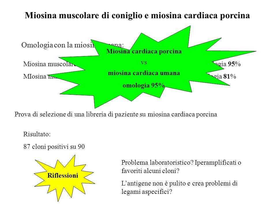 Miosina muscolare di coniglio e miosina cardiaca porcina Prova di selezione di una libreria di paziente su miosina cardiaca porcina Risultato: 87 clon