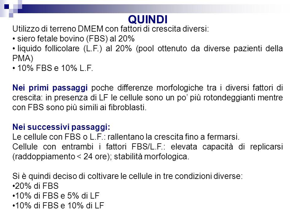 QUINDI Utilizzo di terreno DMEM con fattori di crescita diversi: siero fetale bovino (FBS) al 20% liquido follicolare (L.F.) al 20% (pool ottenuto da diverse pazienti della PMA) 10% FBS e 10% L.F.