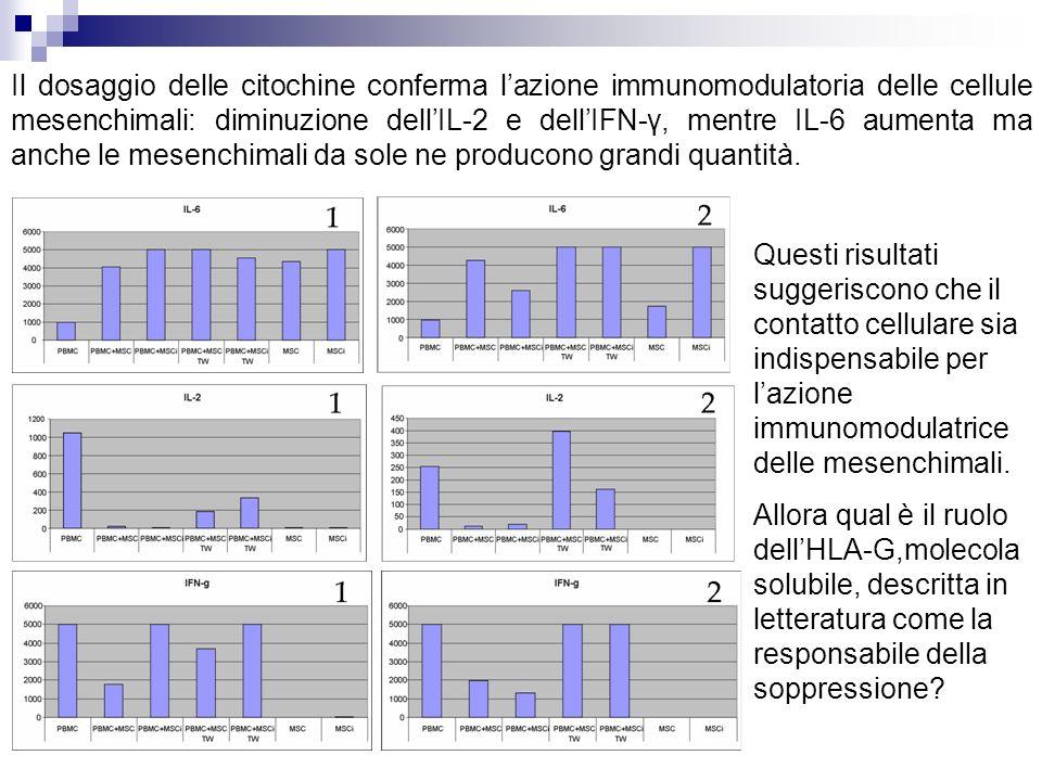 Il dosaggio delle citochine conferma lazione immunomodulatoria delle cellule mesenchimali: diminuzione dellIL-2 e dellIFN-γ, mentre IL-6 aumenta ma anche le mesenchimali da sole ne producono grandi quantità.