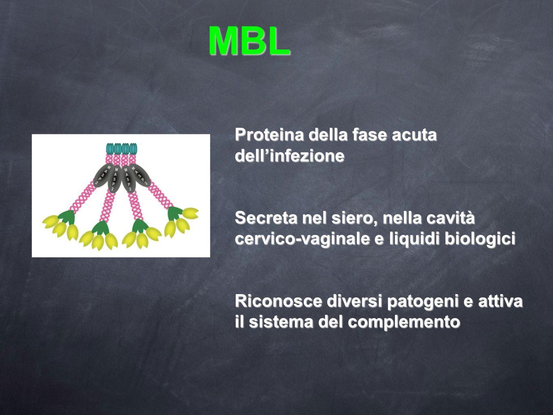MBL Proteina della fase acuta dellinfezione Secreta nel siero, nella cavità cervico-vaginale e liquidi biologici Riconosce diversi patogeni e attiva i
