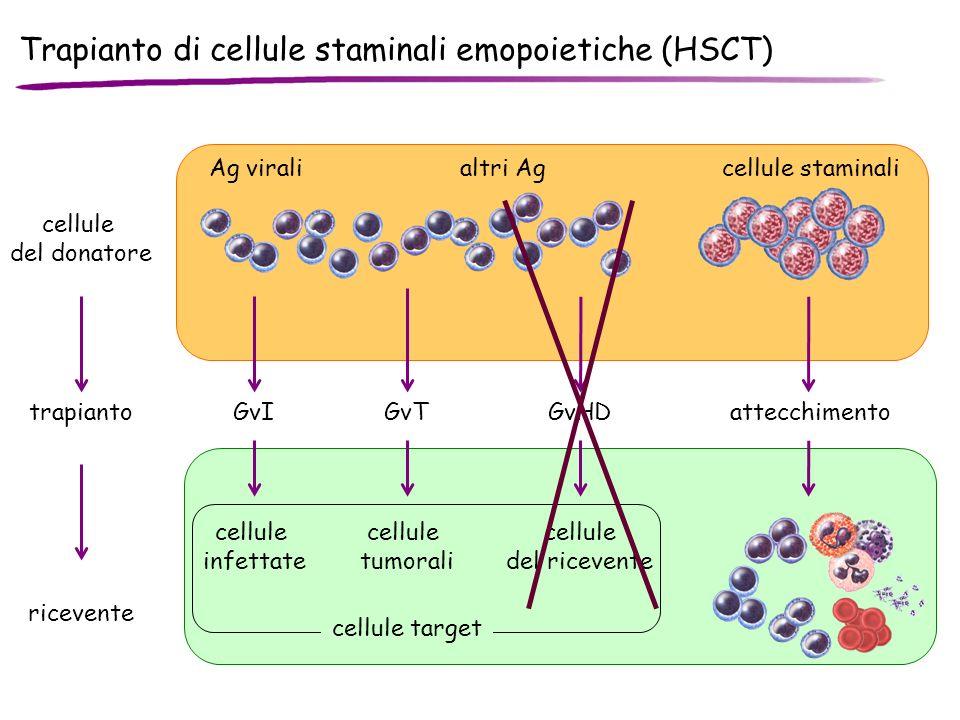 Trapianto di cellule staminali emopoietiche (HSCT) trapianto cellule del donatore Ag viralialtri Agcellule staminali attecchimento ricevente cellule i