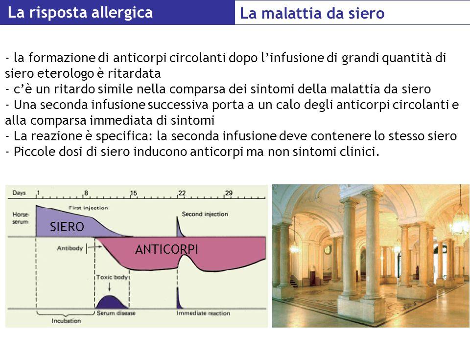 La risposta allergica La malattia da siero - la formazione di anticorpi circolanti dopo linfusione di grandi quantità di siero eterologo è ritardata -