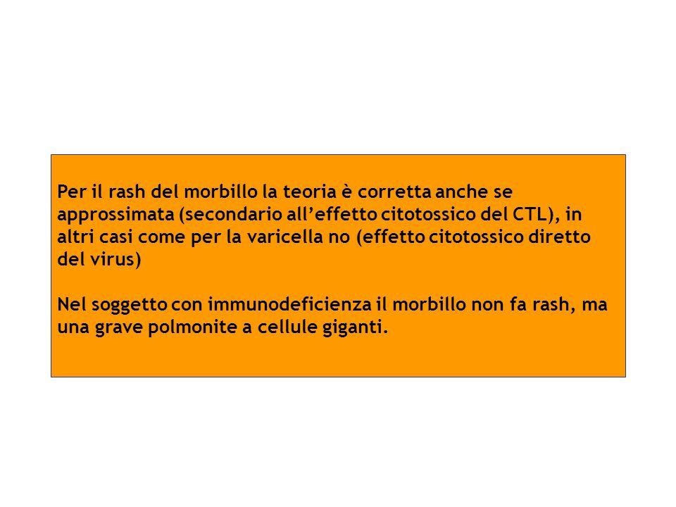 Per il rash del morbillo la teoria è corretta anche se approssimata (secondario alleffetto citotossico del CTL), in altri casi come per la varicella n