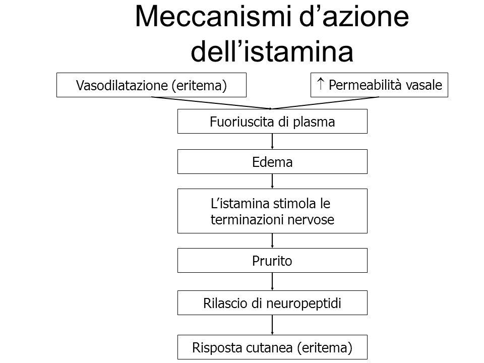 Meccanismi dazione dellistamina Vasodilatazione (eritema) Permeabilità vasale Fuoriuscita di plasma Edema Listamina stimola le terminazioni nervose Pr