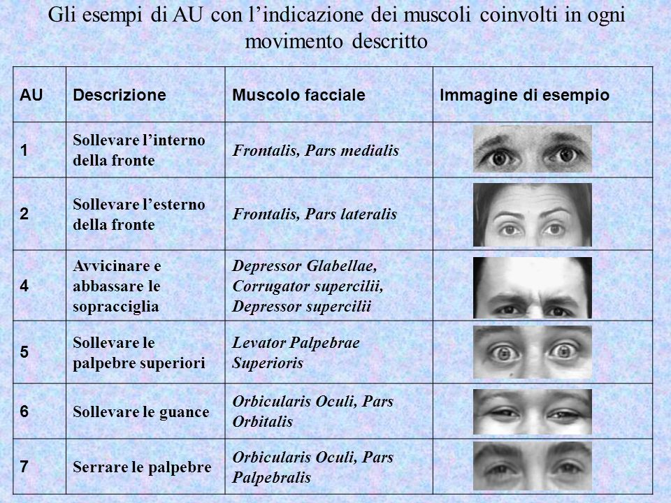 Gli esempi di AU con lindicazione dei muscoli coinvolti in ogni movimento descritto AUDescrizioneMuscolo faccialeImmagine di esempio 1 Sollevare linte