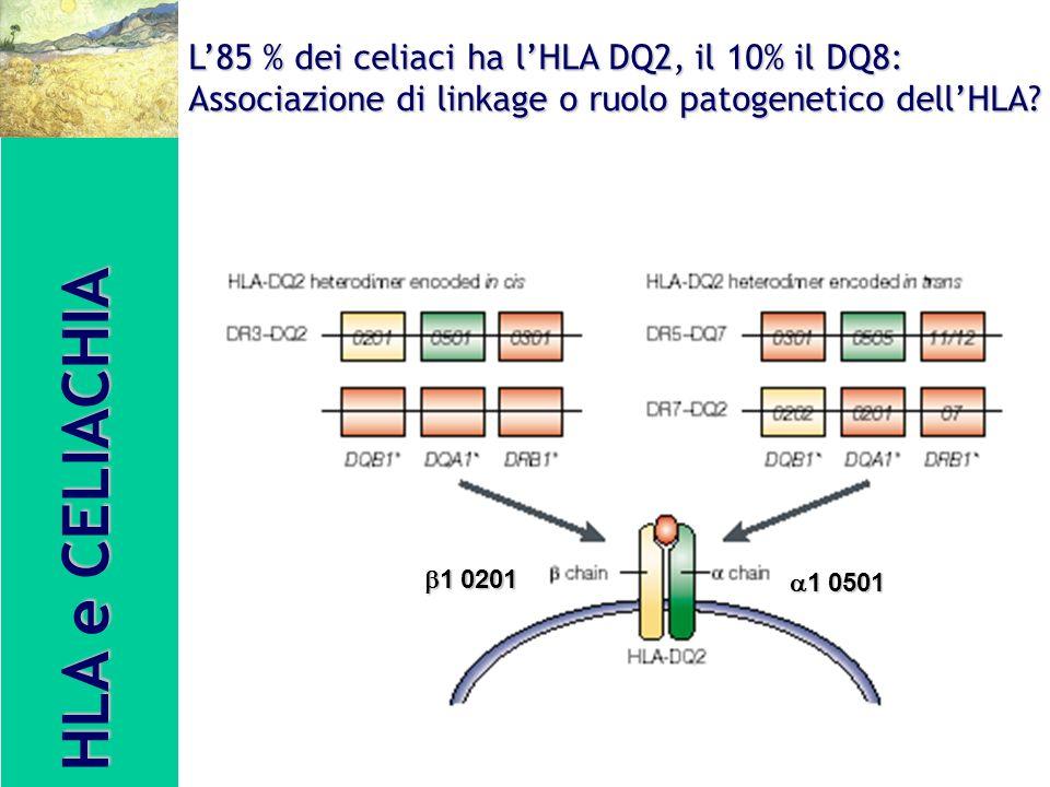 HLA e CELIACHIA L85 % dei celiaci ha lHLA DQ2, il 10% il DQ8: Associazione di linkage o ruolo patogenetico dellHLA? 1 0501 1 0501 1 0201 1 0201