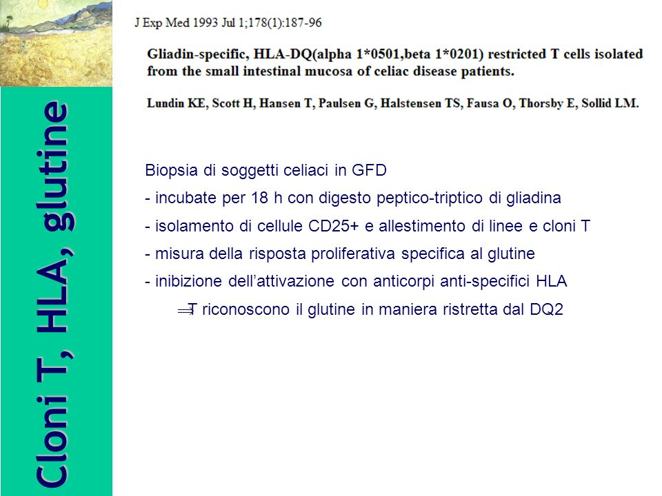 Cloni T, HLA, glutine Biopsia di soggetti celiaci in GFD - incubate per 18 h con digesto peptico-triptico di gliadina - isolamento di cellule CD25+ e allestimento di linee e cloni T - misura della risposta proliferativa specifica al glutine - inibizione dellattivazione con anticorpi anti-specifici HLA T riconoscono il glutine in maniera ristretta dal DQ2