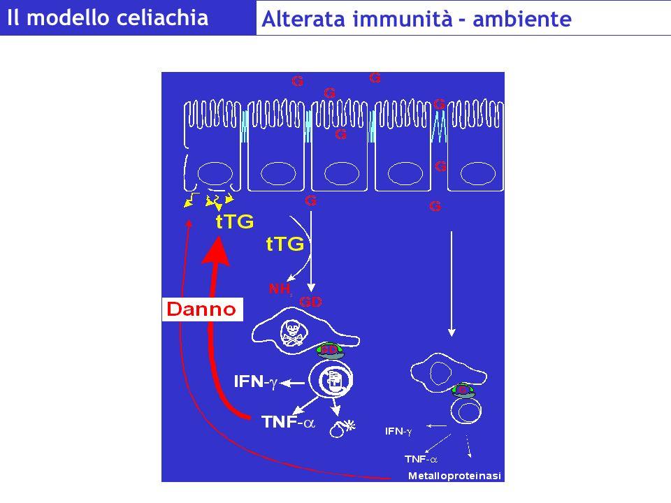 Il modello celiachia Alterata immunità - ambiente