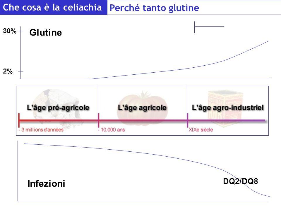 2% 30% 200 anni Glutine Infezioni DQ2/DQ8 Che cosa è la celiachia Perché tanto glutine