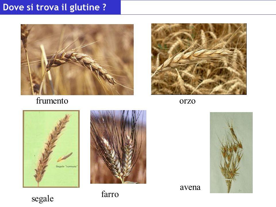 Dove si trova il glutine ? frumentoorzo segale avena farro
