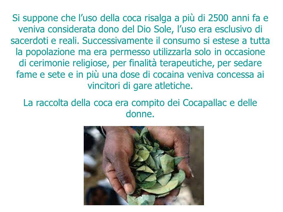 Si suppone che luso della coca risalga a più di 2500 anni fa e veniva considerata dono del Dio Sole, luso era esclusivo di sacerdoti e reali.