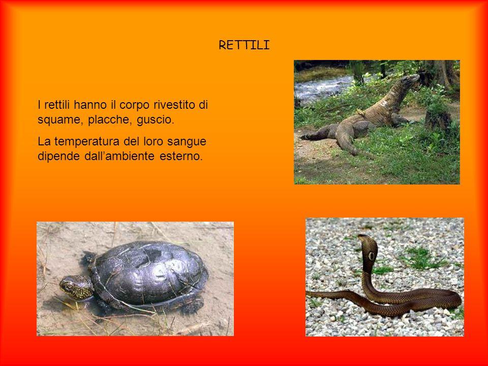 RETTILI I rettili hanno il corpo rivestito di squame, placche, guscio. La temperatura del loro sangue dipende dallambiente esterno.