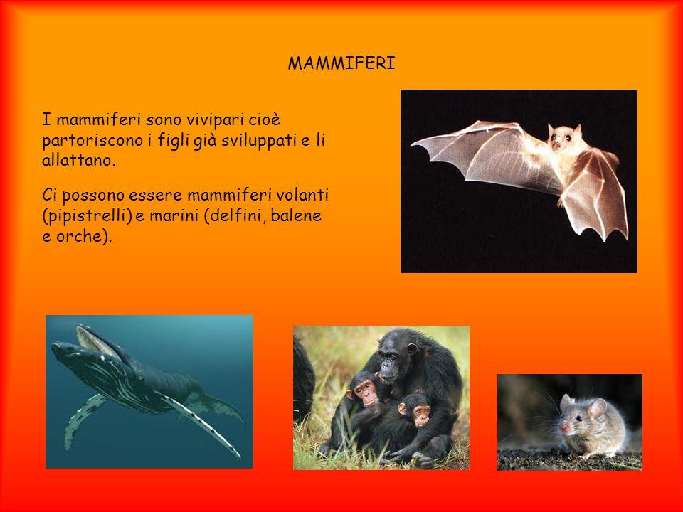 MAMMIFERI I mammiferi sono vivipari cioè partoriscono i figli già sviluppati e li allattano. Ci possono essere mammiferi volanti (pipistrelli) e marin