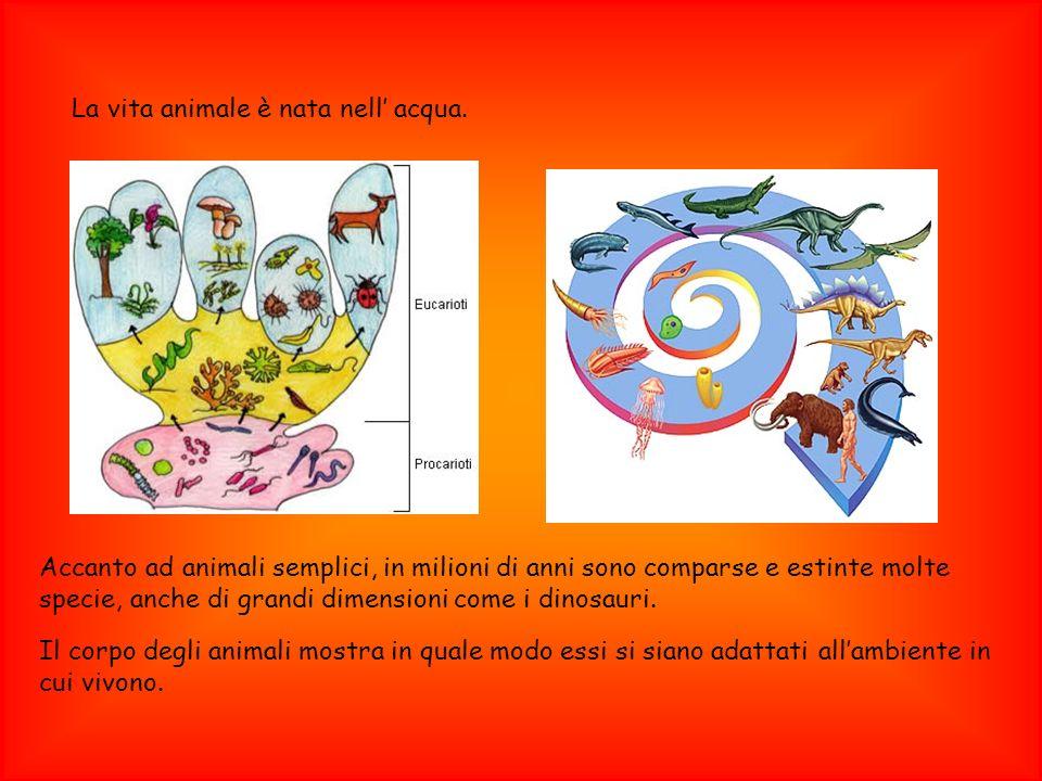 Accanto ad animali semplici, in milioni di anni sono comparse e estinte molte specie, anche di grandi dimensioni come i dinosauri. Il corpo degli anim
