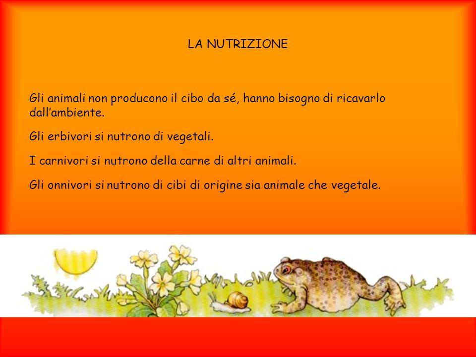 LA NUTRIZIONE Gli animali non producono il cibo da sé, hanno bisogno di ricavarlo dallambiente. Gli erbivori si nutrono di vegetali. I carnivori si nu