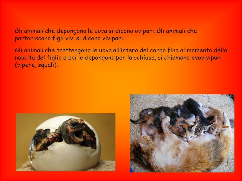 Gli animali che depongono le uova si dicono ovipari. Gli animali che partoriscono figli vivi si dicono vivipari. Gli animali che trattengono le uova a
