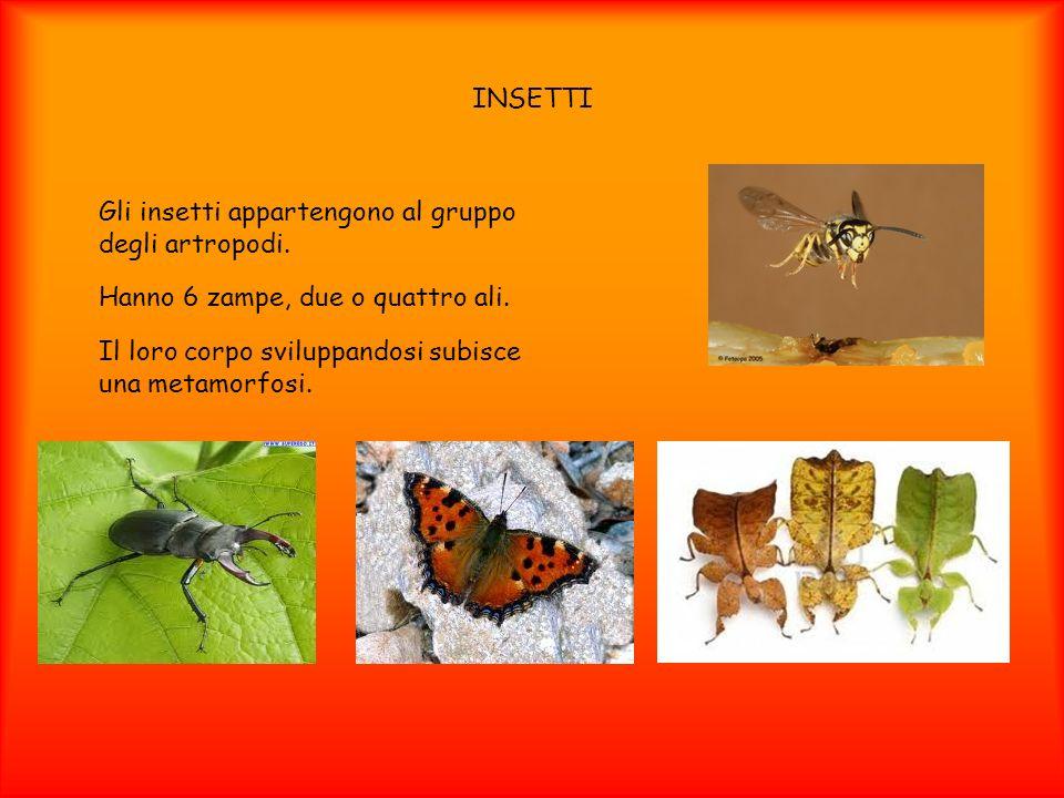 INSETTI Gli insetti appartengono al gruppo degli artropodi. Hanno 6 zampe, due o quattro ali. Il loro corpo sviluppandosi subisce una metamorfosi.