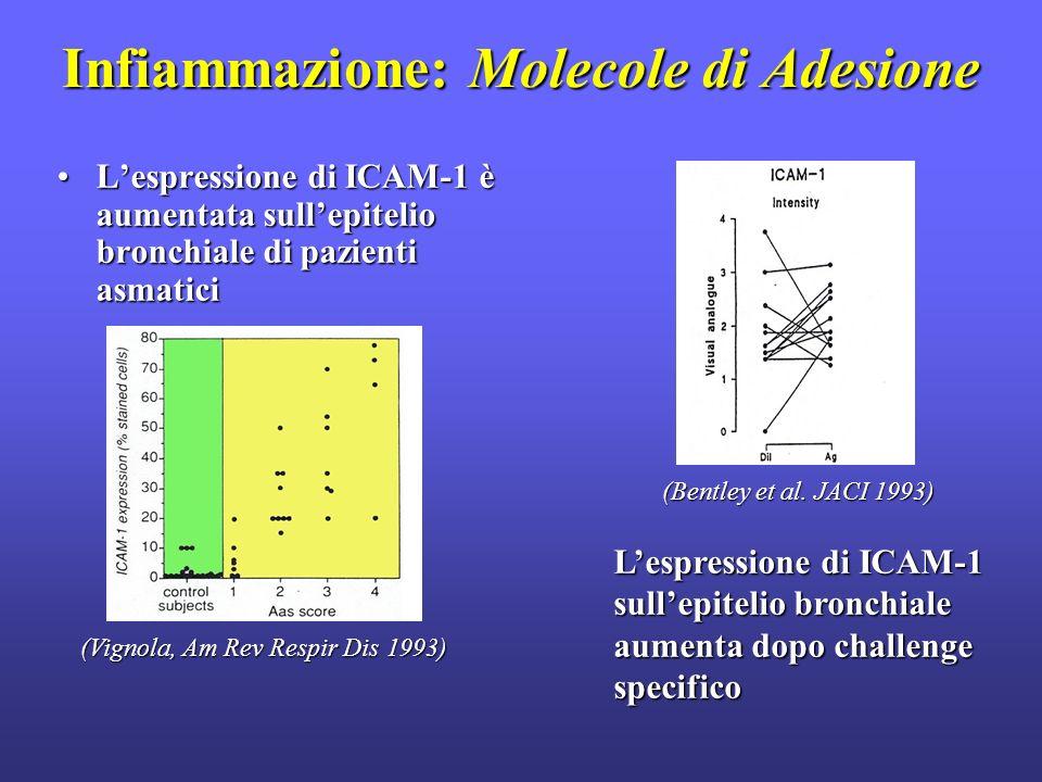 Infiammazione: Molecole di Adesione Lespressione di ICAM-1 è aumentata sullepitelio bronchiale di pazienti asmaticiLespressione di ICAM-1 è aumentata