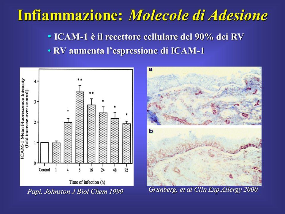 Papi, Johnston J Biol Chem 1999 Grunberg, et al Clin Exp Allergy 2000 ICAM-1 è il recettore cellulare del 90% dei RV ICAM-1 è il recettore cellulare d