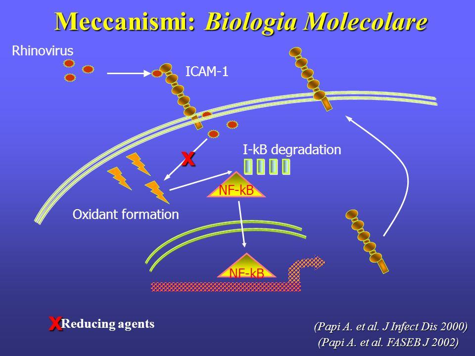 Meccanismi: Biologia Molecolare Meccanismi: Biologia Molecolare Rhinovirus ICAM-1 Oxidant formation (Papi A. et al. FASEB J 2002) xx Reducing agents I