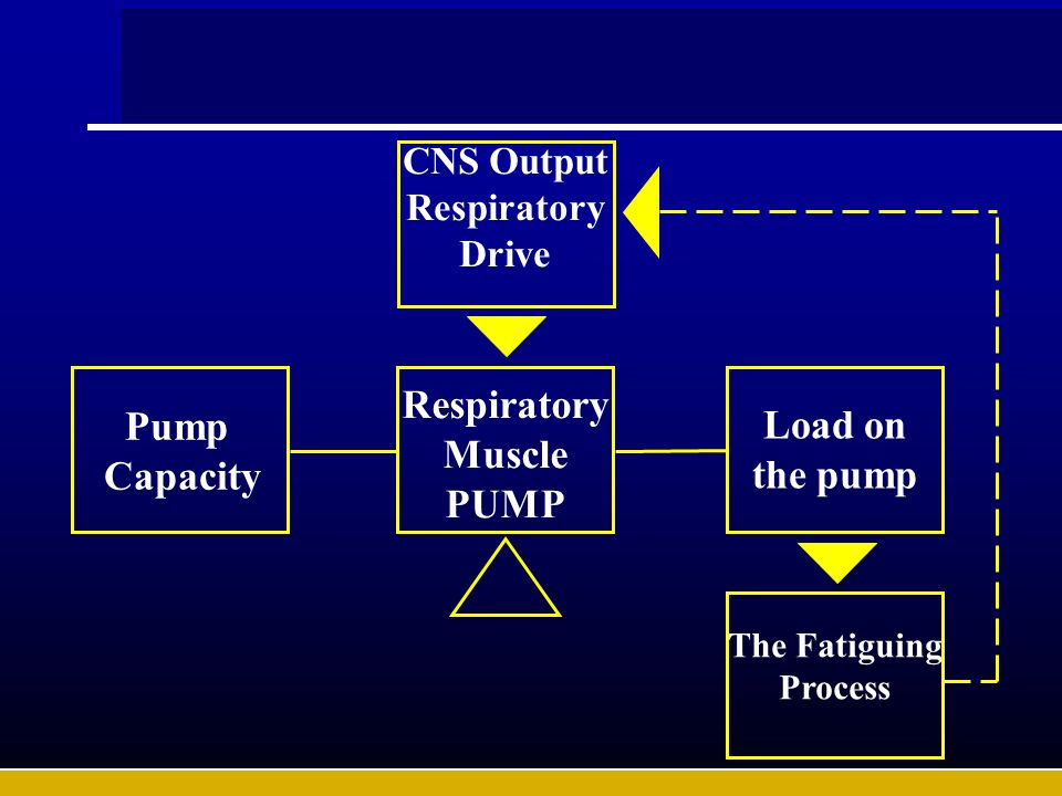 CNS Output Respiratory Drive Pump Capacity Respiratory Muscle PUMP Load on the pump The Fatiguing Process
