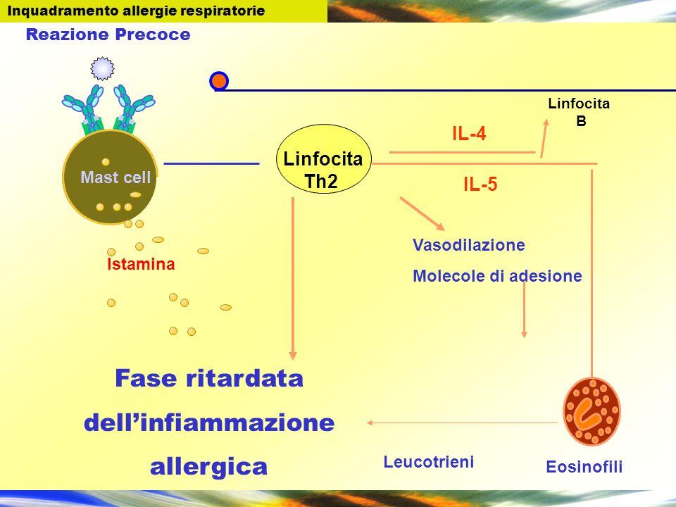 Linfocita Th2 Linfocita B Fase ritardata dellinfiammazione allergica IL-5 IL-4 Vasodilazione Molecole di adesione Mast cell Eosinofili Leucotrieni Ist