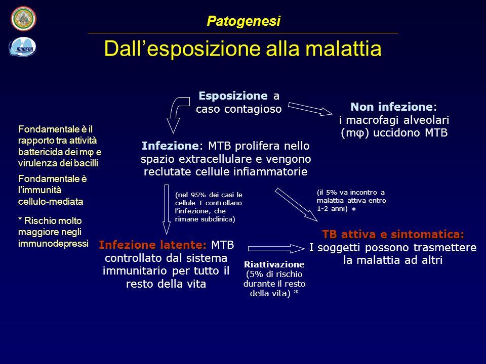Dallesposizione alla malattia Esposizione a caso contagioso Infezione: MTB prolifera nello spazio extracellulare e vengono reclutate cellule infiammat