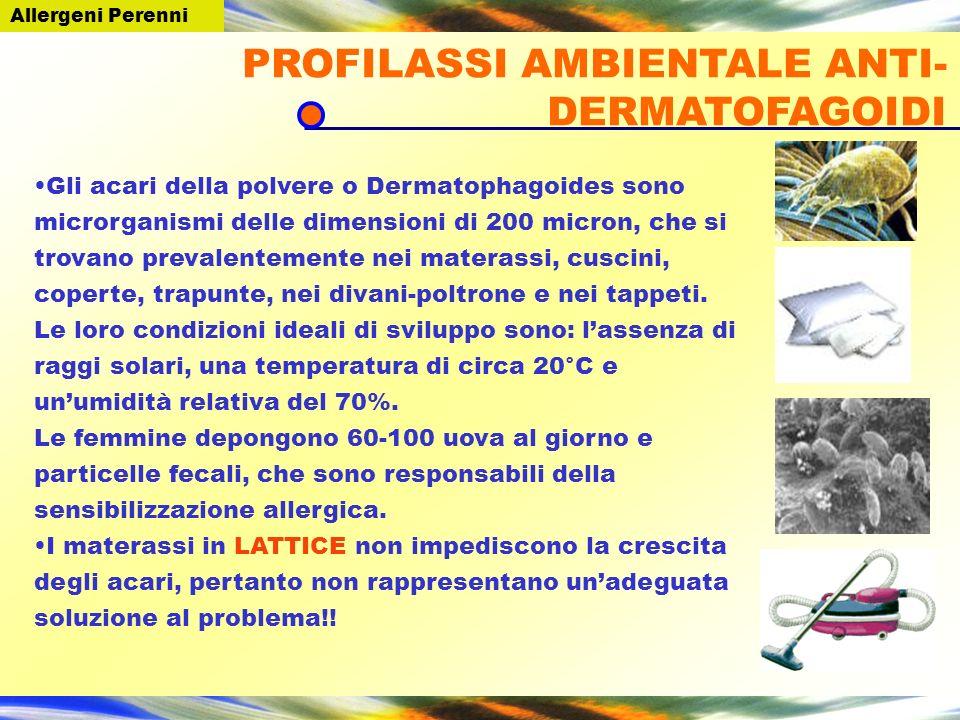 Gli acari della polvere o Dermatophagoides sono microrganismi delle dimensioni di 200 micron, che si trovano prevalentemente nei materassi, cuscini, c