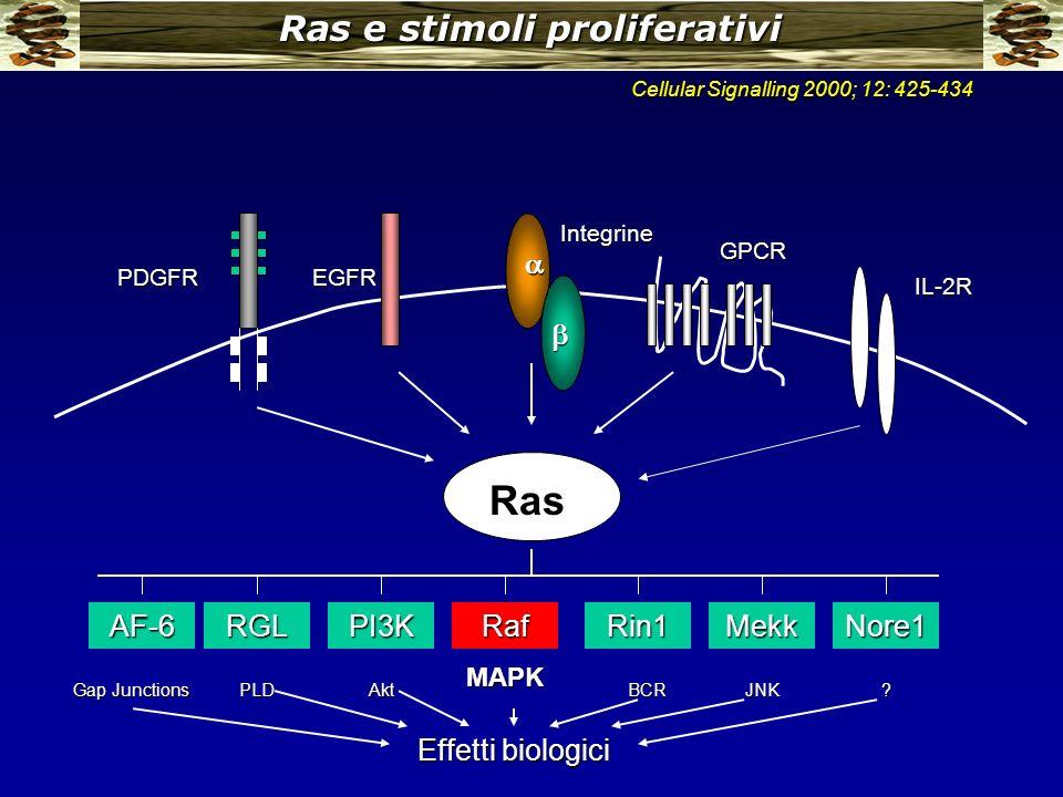 Ras e stimoli proliferativi Ras PDGFREGFR AF-6RGLPI3KRafRin1MekkNore1 Gap Junctions PLDAkt MAPK BCRJNK? Effetti biologici Integrine GPCR IL-2R Cellula
